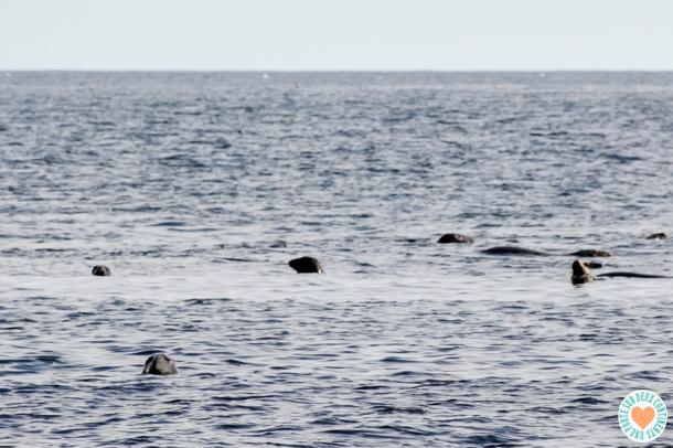 Île Bonaventure Baie des Marigots
