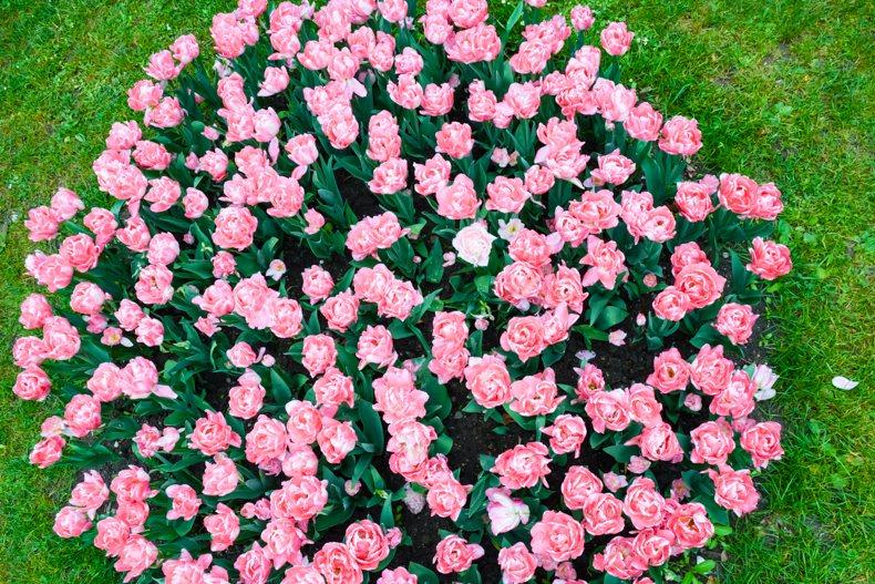 Morges Fête de la Tulipe