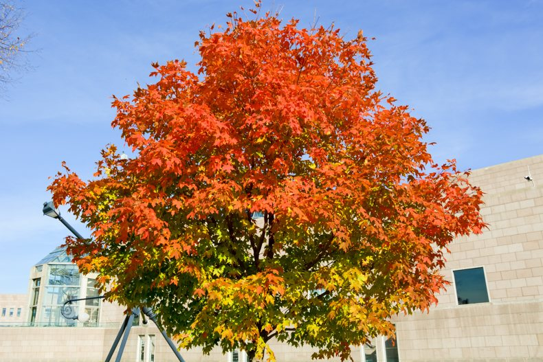 Fall colors Ottawa